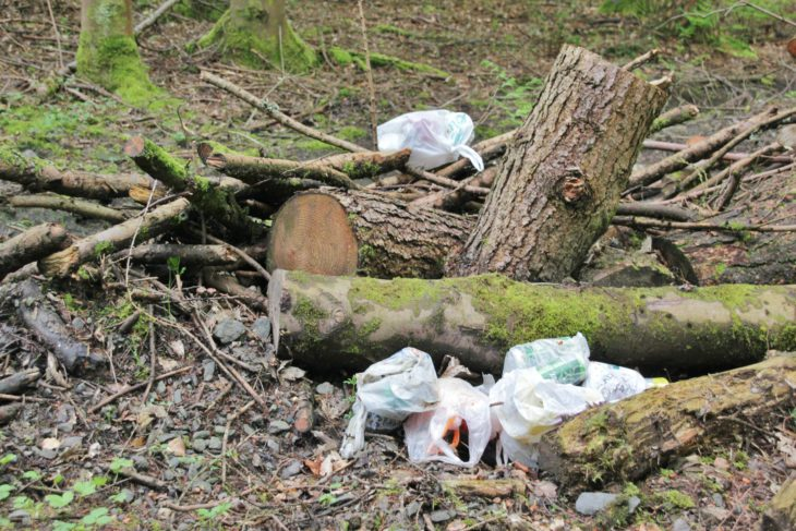 Litter in the woodland - Image Tracy Lambert