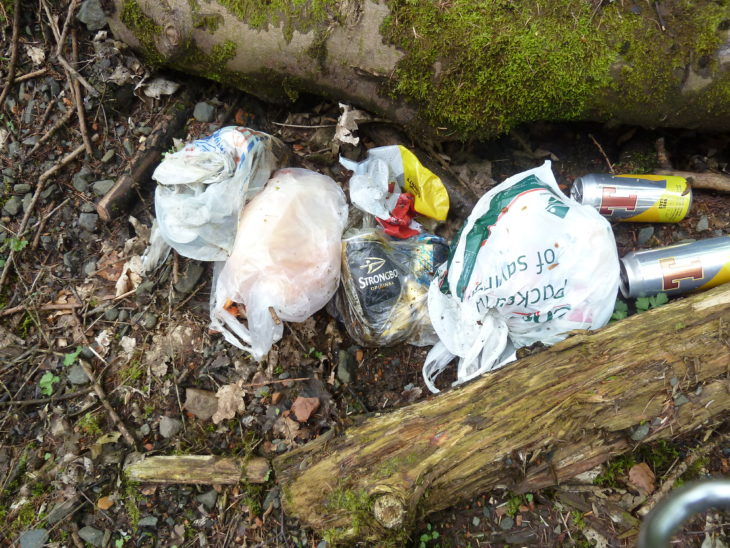 Litter in the woodland Image Tracy Lambert