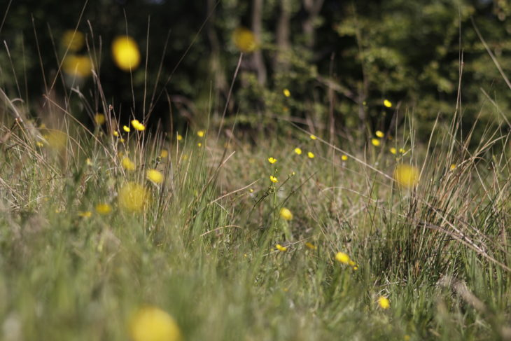 Meadow of wildflowers © Paul Barclay