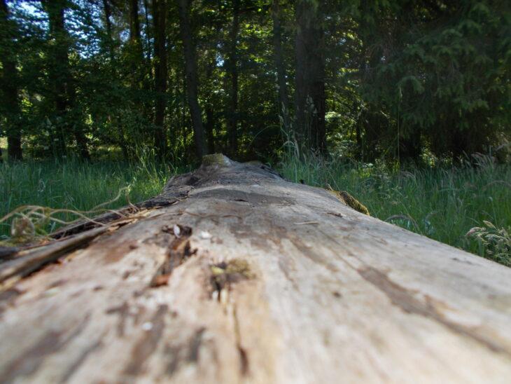 Photo taken along the length of a fallen tree trunk